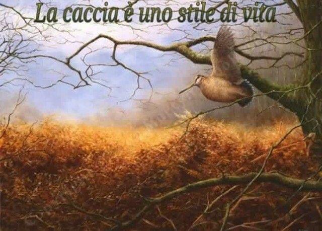 #caccia #passione #natura #cinghiale #falco #lepre #setteringlese #englishsetter #canidaferma #canidacaccia #sirya #rocky #7mesi #ferma #fermasuquaglia #coturnix #coturnice #pernice #addestramento #chasse #beccaccia #quaglia #beccasse #hunt #hunting #hunting #huntingquails #follow #instasetter #instadog #instachasse http://misstagram.com/ipost/1555904406032745253/?code=BWXrtBSDAMl