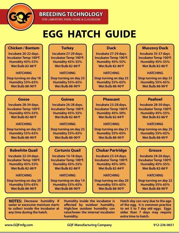 Egg hatch guide