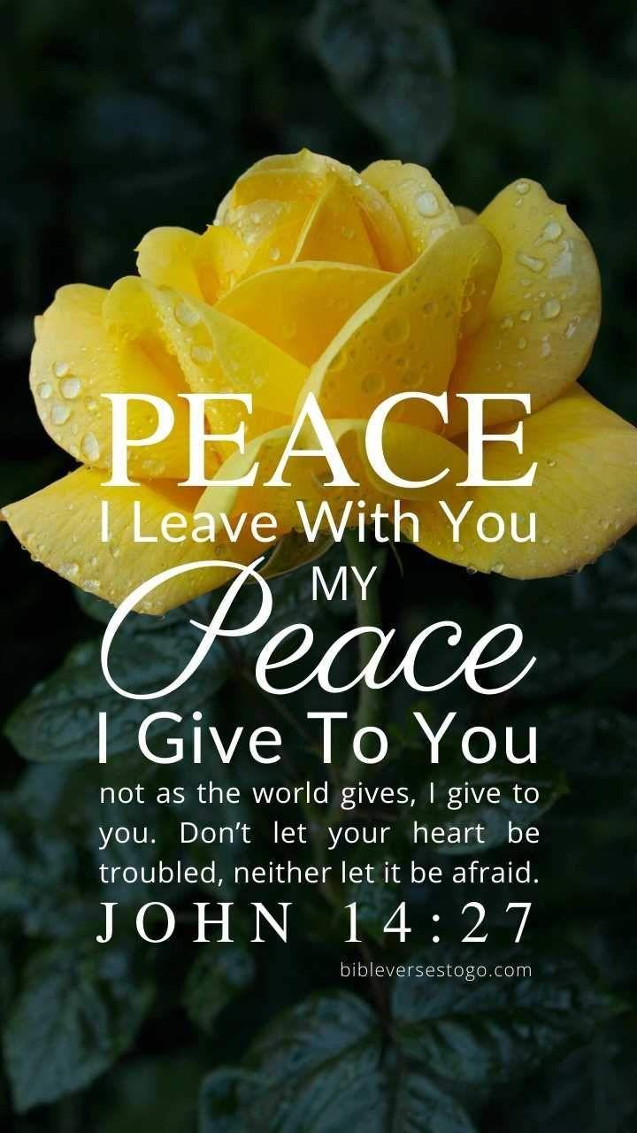 Yellow Rose John 14:27 | Yellow roses, John 14, John 14 27