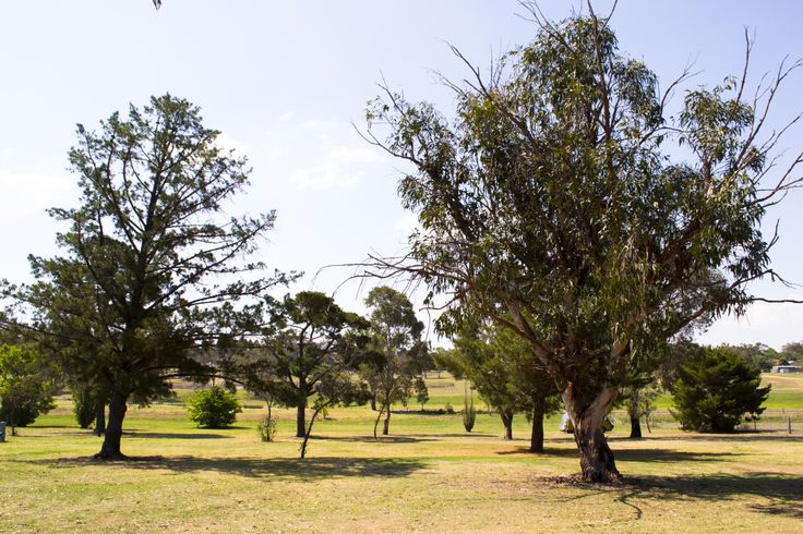 Kahlers Oasis Caravan Park Camping Area