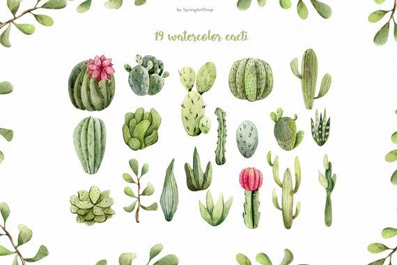 Watercolor Cacti Clipart Tropical Watercolor Plant Summer Png