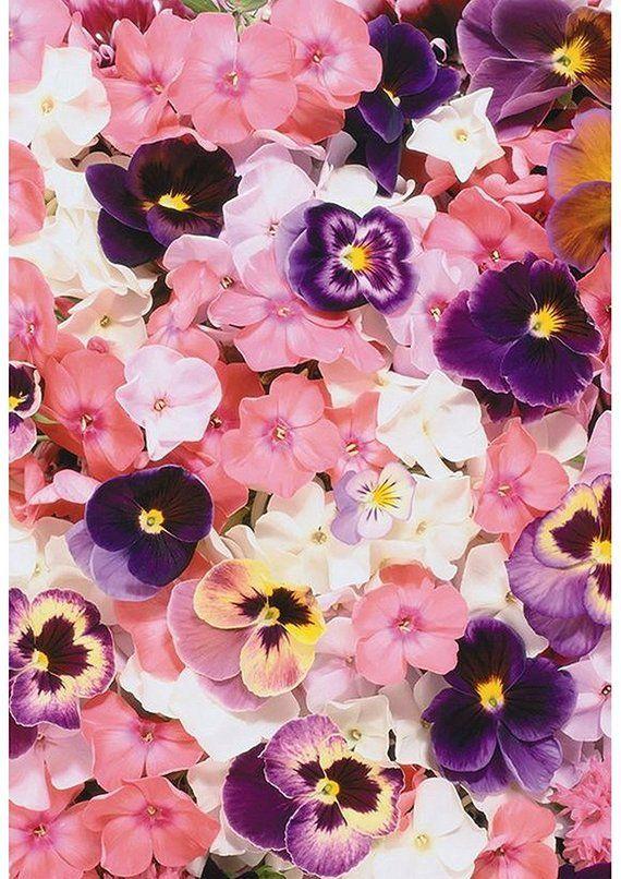 Image 0 Pansies Flowers Flower Background Wallpaper Floral Wallpaper