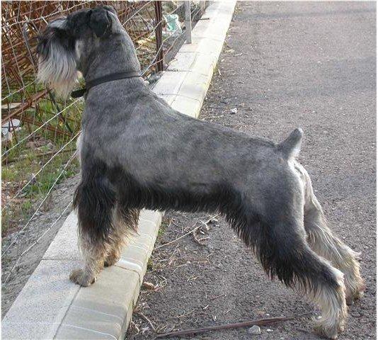mejores razas de perros de busqueda