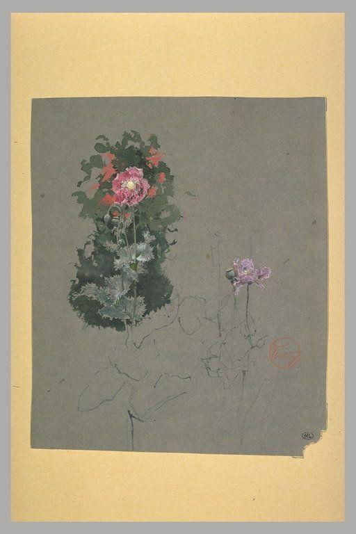 Inventaire du département des Arts graphiques - Fleurs : pavots roses et mauves - FORTUNY Mariano