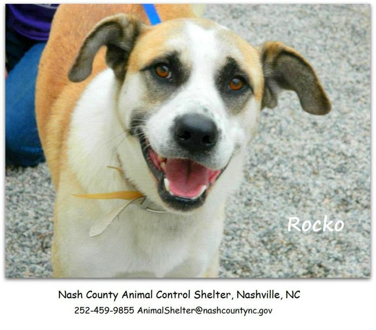 Pin by Sandy Hemsher on adoptable pets! Dog sounds