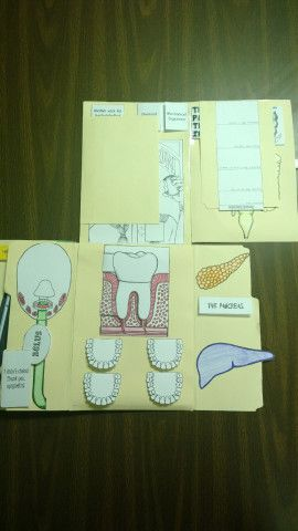 Here's our lapbook monster featuring Lesson 4:  The Digestive System.   In Apologia's Exploring Creation with Human Anatomy and Physiology, they add in the Renal System.  We're going to…