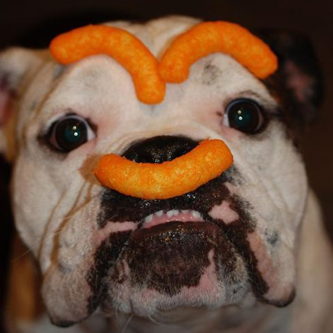 Dogs with food on their head.