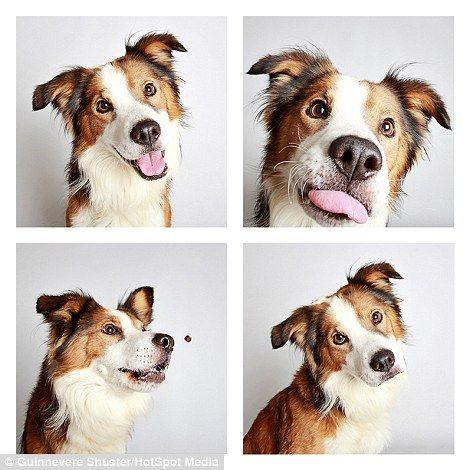Abrigo decide fazer fotos criativas de seus cães para incentivar adoção A fotógrafa Guinnevere Shuster usou as fotos de cabine como inspiração. cachorros-abrigo-04