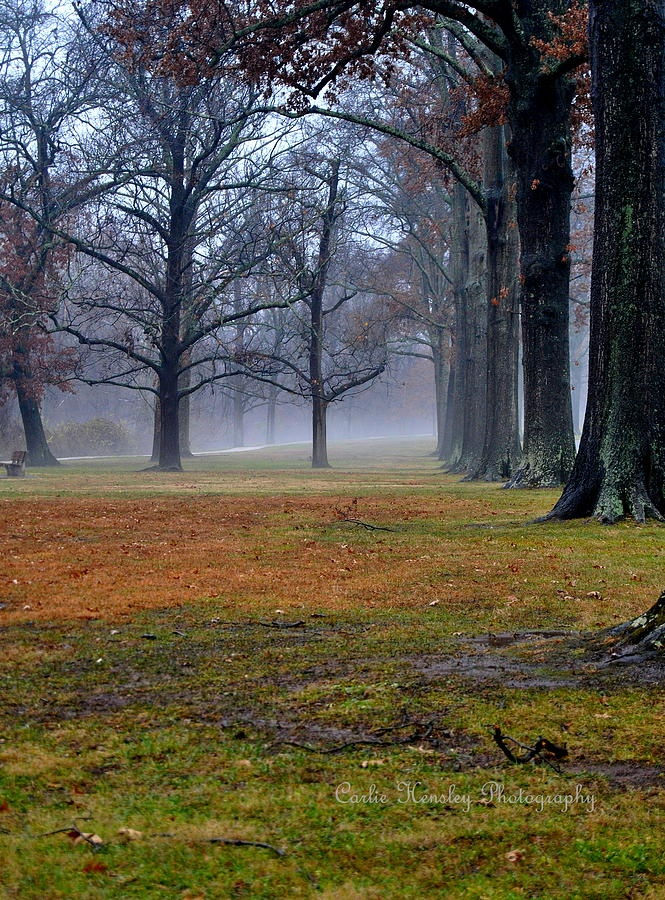 ✯ A Foggy December