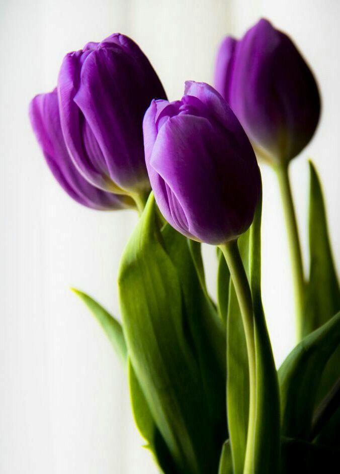 Una flor cada día…...