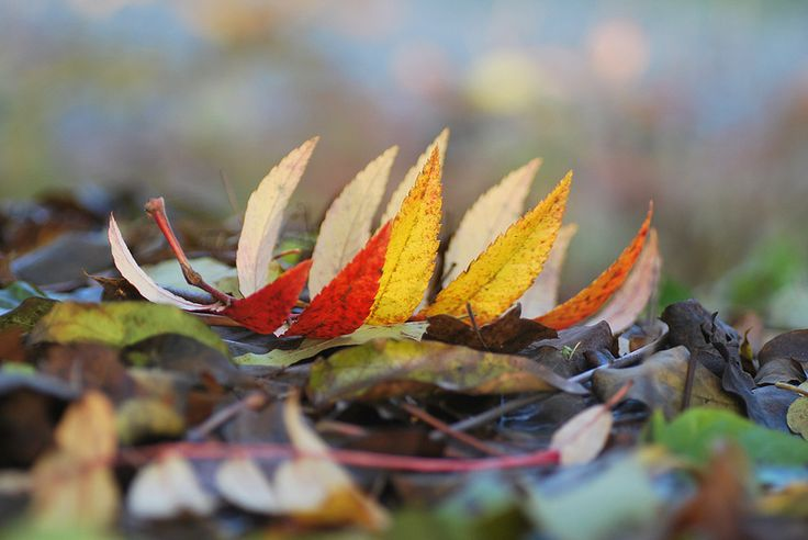 Leaves | by littlekiss☆