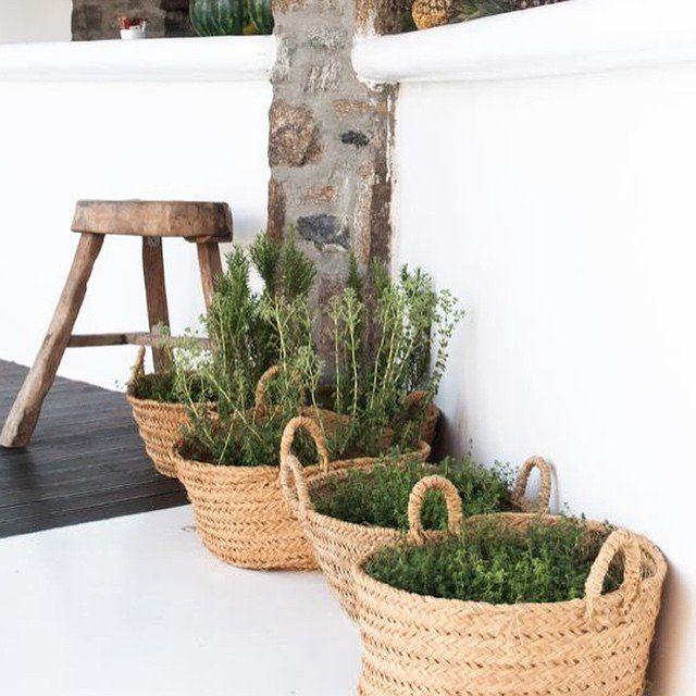 Chez vous: les plantes, décoration végétale, plantes disposées dans des paniers