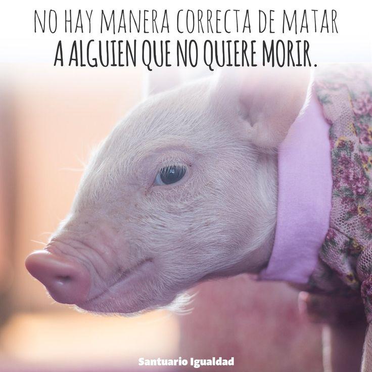 Si podemos alimentarnos sin dañar a los animales por qué no hacerlo?  #friensnotfood https://t.co/LFBmzQMlDB