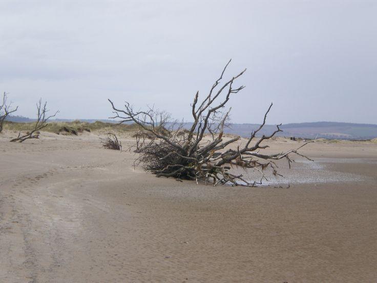 Tentsmuir beach