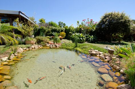 Ecosys lagos ornamentais ornamental lake pinterest for Artificial fish pond