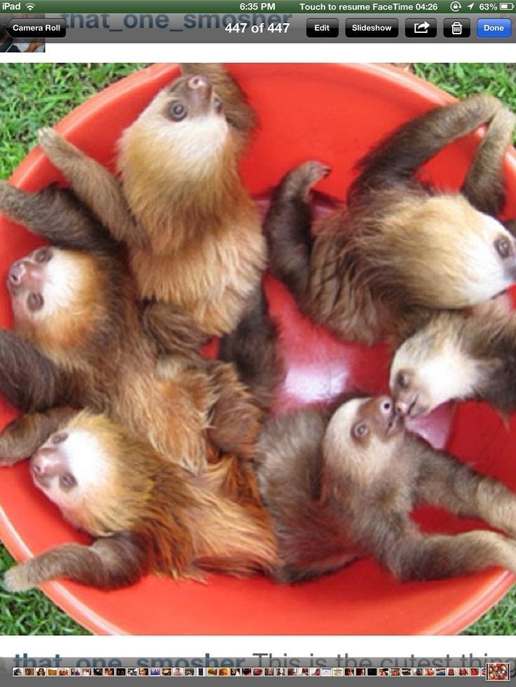 Bucket of sloths :)