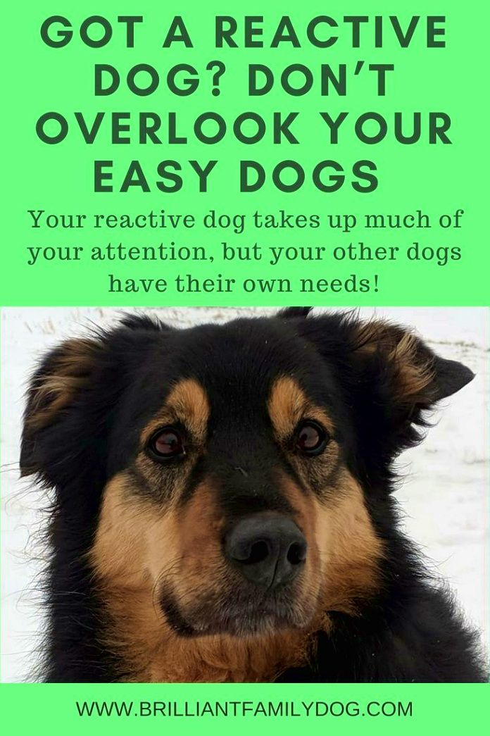 Dog Training Hacks Obedience Classes Are An Easy Way To Whip Your
