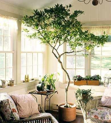 What is the easiest way to add #green to your decor? Indoor plants! #coloroftheyear