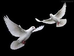 Resultado de imagem para imagens espirito santo forma pomba