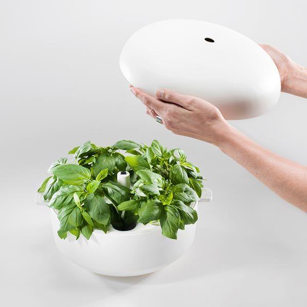 Smart Garden 6 By Plantui Smart Garden Indoor Garden 640 x 480