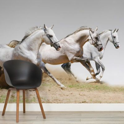 horse-animal-square-1-wall-murals