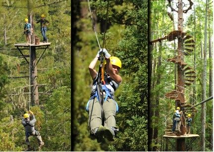 Sonoma Canopy Tours (Occidental, CA) - Zipline the Redwood Forests 6250 Bohemian Hwy Occidental, CA 95465