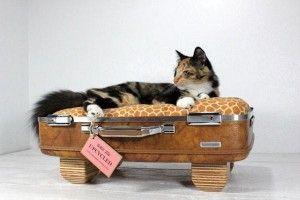 Cucce per cani e gatti da oggetti riciclati | via eticamente.net