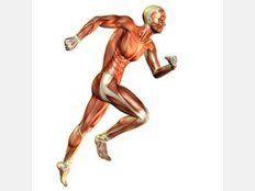 Darstellung Muskelan- und entspannung beim Sprinten und Laufen im menschlichen Körper.