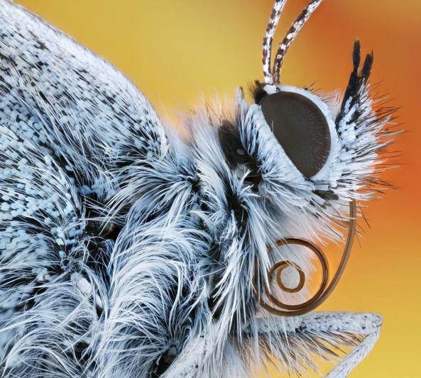 Портреты насекомых крупным планом