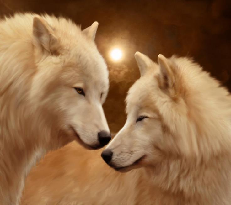 эрудит белые волки пара картинки фотопечать