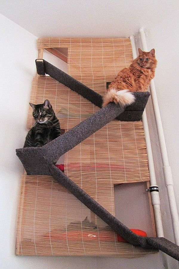 "Using a dead corner - a cat climb with hidden ""rooms"" behind each shelf"
