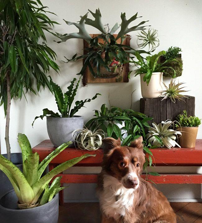 10 favorite pet-friendly house plants