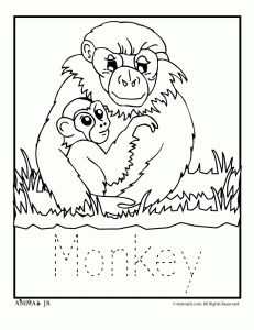 Zoo Animal Coloring Pages Baby Monkey