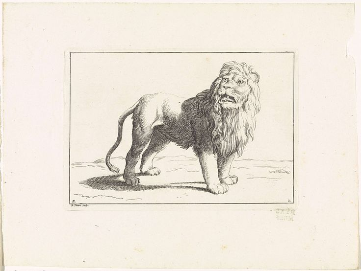 Bernard Picart | Brullende leeuw, Bernard Picart, 1729 | Een leeuw staat op het gras en brult. Gemerkt linksonder: E. Genummerd rechtsonder: 2.