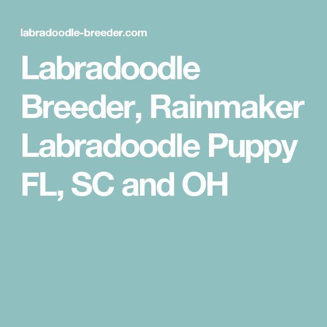 Labradoodle Breeder, Rainmaker Labradoodle Puppy FL, SC and OH