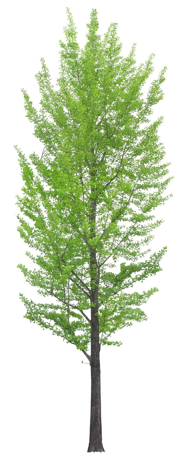 Top view plants 02 2d plant entourage for architecture - 02 Png 661 1600