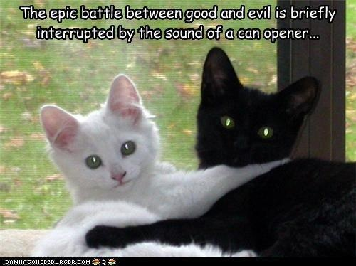 Ceiling Cat and Basement Cat always keep their priorities straight. & The 188 best Basement Cat images on Pinterest   Basement cat Kitty ...