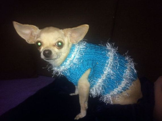 Clothing for Dog sweater for dog Chihuahua by RakushaKnittingShop