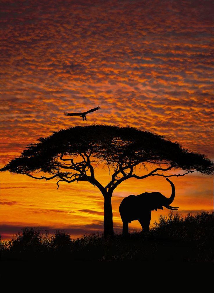 La belleza de África se revela en medio de la puesta del sol ardiente y animales exóticos. Contacta con nosotros al 951 081 159, vía email info@bricotiendas.com o visita nuestra tienda especializada en papeles pintados www.papeles-pintados.es.