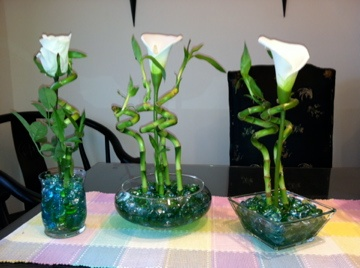 I want lucky bamboo as my table centerpieces!! I like the one on the left.
