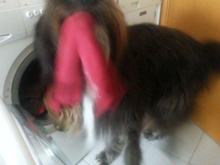 Muxu me ayuda con la lavadora.