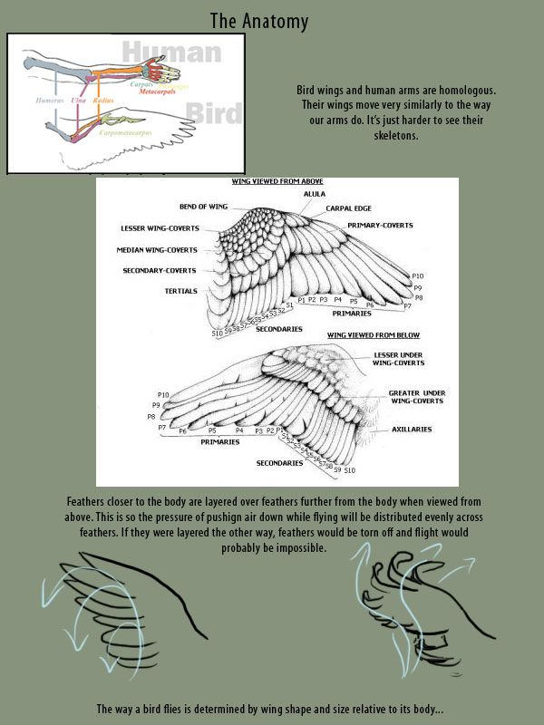 Wings References! - with tutorials on heavy creatures