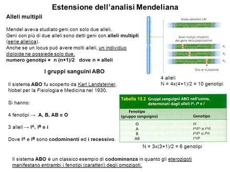 Estensione dell'analisi Mendeliana Alleli multipli Mendel aveva studiato geni con solo due alleli. Geni con più di due alleli sono detti geni con alleli.
