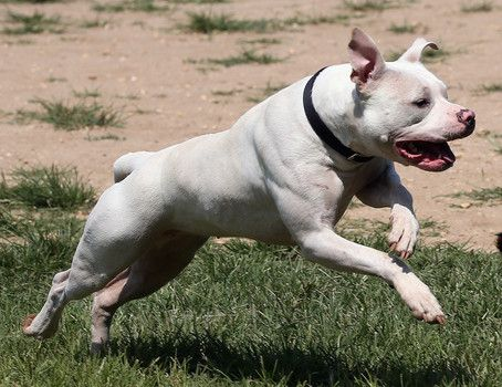 boy running with pit bull - Google Search