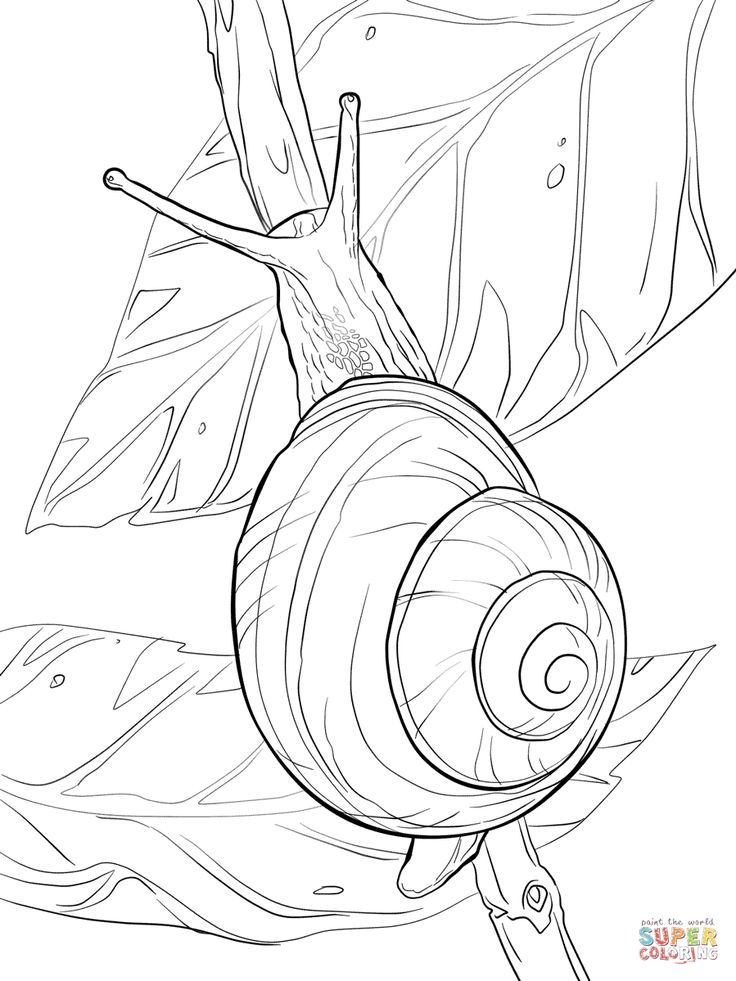 White Lipped Snail Coloring Page From Category Select 27362 Printable Crafts Of Cartoons Nature Animals Bible And Many More