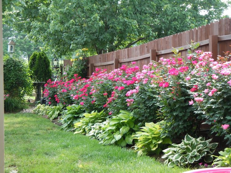 Knockout roses and hostas planted along fence: Gardens Ideas, Green Thumb, Knockout Rose, Back Yard Rose Gardens, Backyard, Hydrangeas And Rose Gardens, Outdoor Spaces, Hosta Plants, Hosta And Hydrangeas