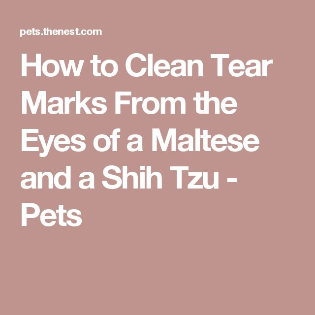 How to Clean Tear Marks From the Eyes of a Maltese and a Shih Tzu - Pets