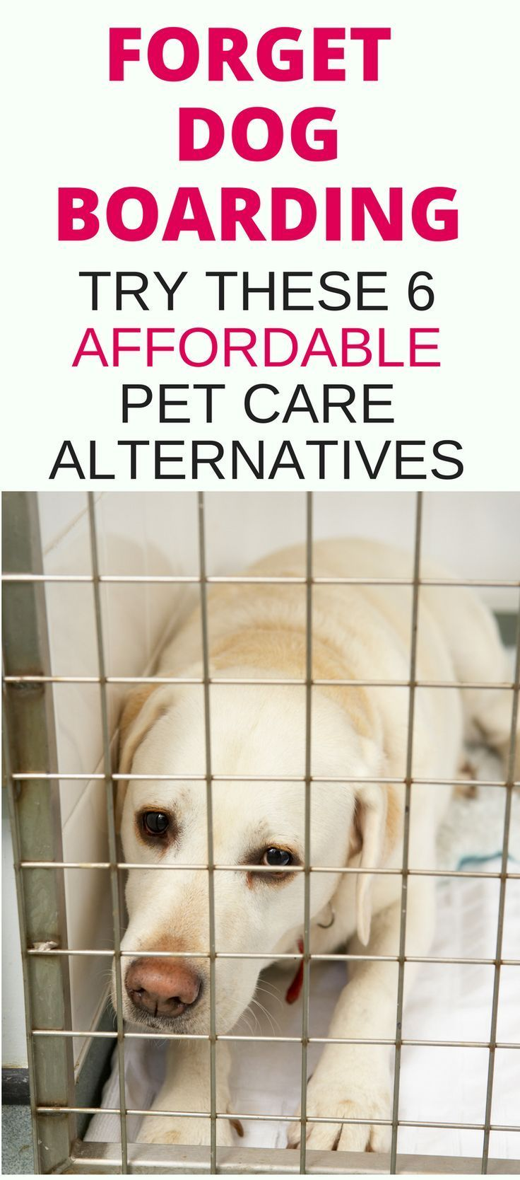 Forget Dog Boarding When It Comes To Affordable Pet Care Learn