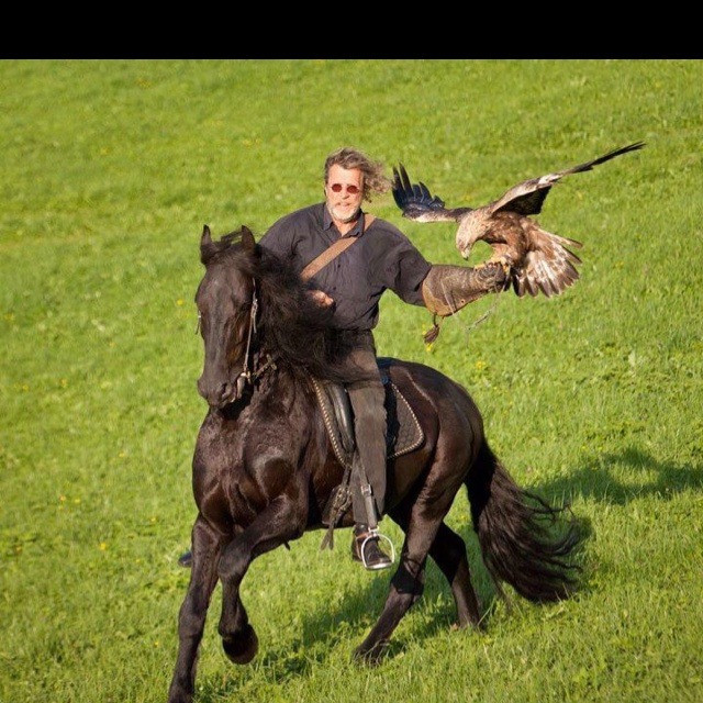 Falconry and horses a perfect world!