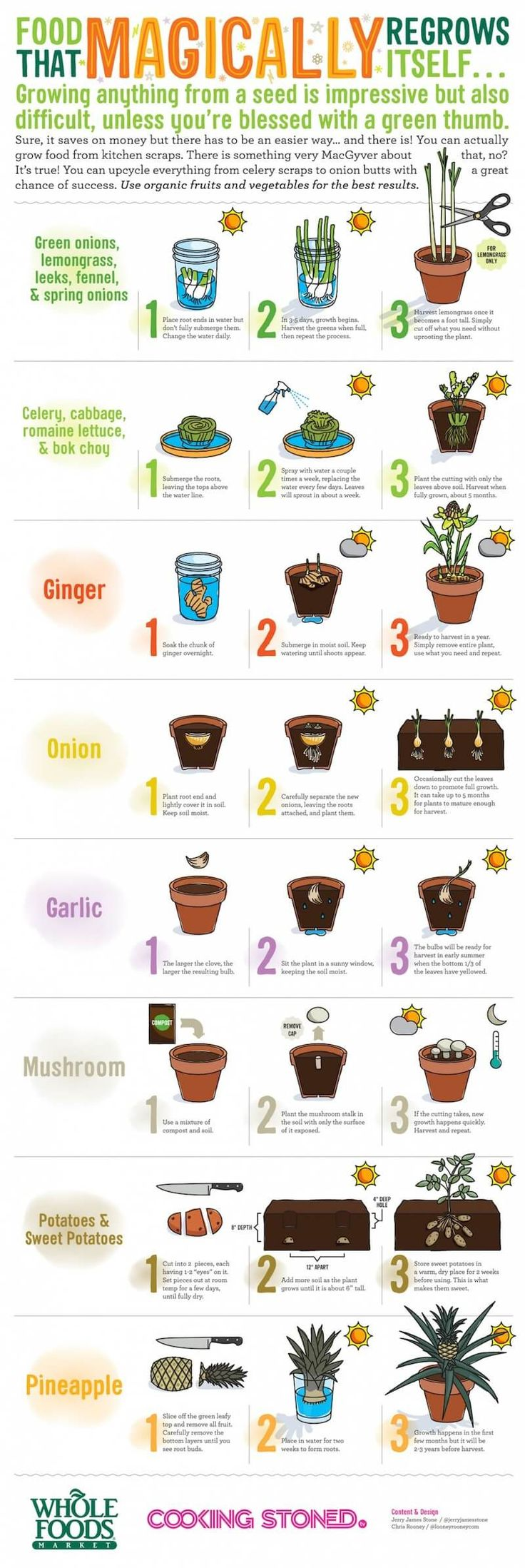 When you are on a budget, re-growing your food scraps is one of the best ways to save money! In fact, there are many vegetables you can grow from scraps, but here are just a few.